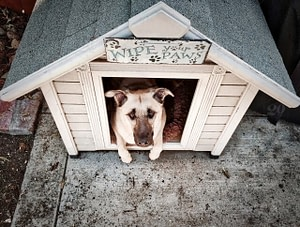 outdoor animals - shelter